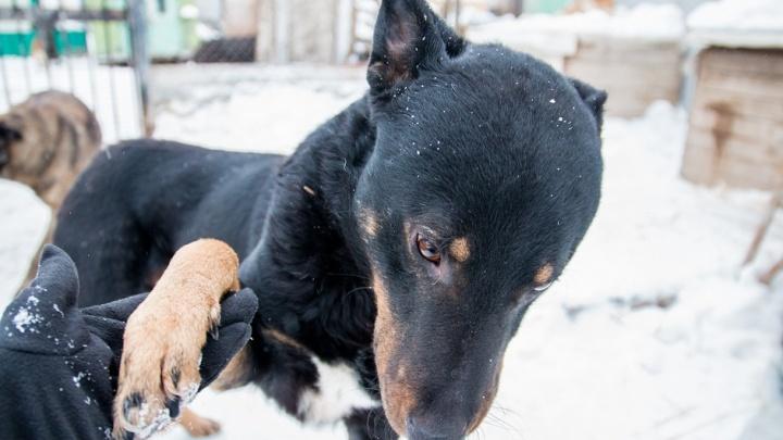 В Самарской области владельцев собак обязали убирать за своими питомцами фекалии