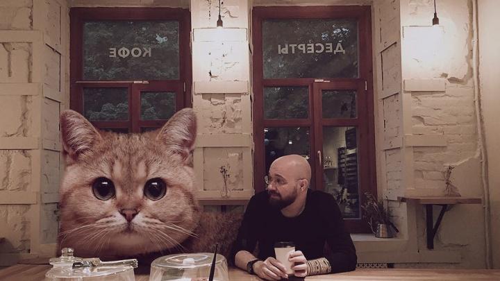 Вторжение гигантских котиков: показываем самую большую милоту Ростова