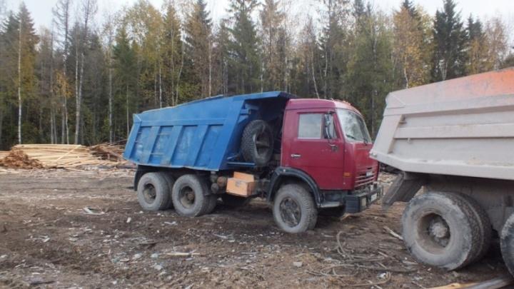 Воровали технику, рубили лес: шестерых жителей Поморья будут судить за участие в преступном бизнесе