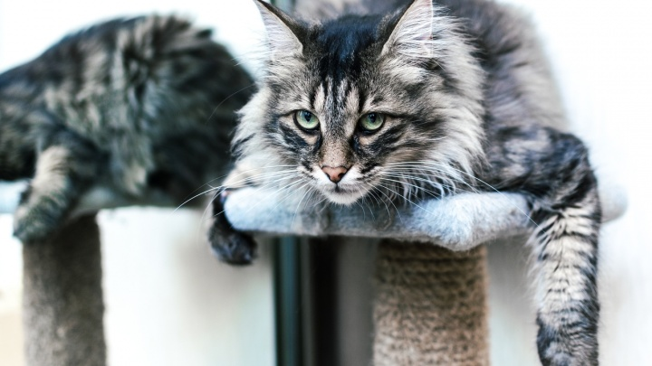 Пушистые, когтистые и самые любимые: в России отмечают День кошек