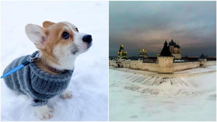 Лучшие фото этой недели: корги-инстаграмщик и невероятная духовная красота Нижегородчины