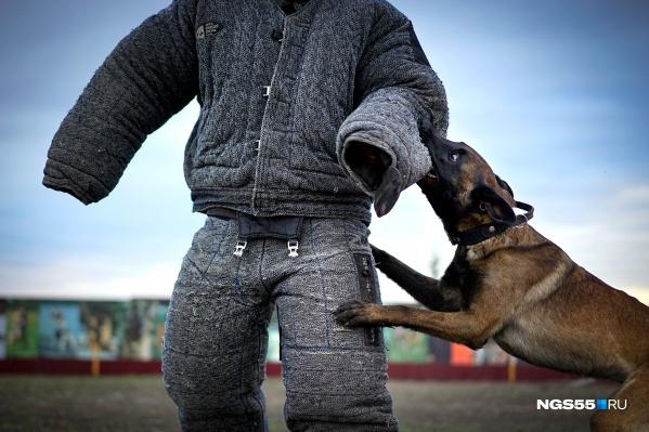 Укус пса чувствуется даже через два слоя защиты