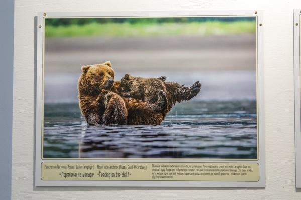 Создатели выставки хотели показать зрителям животных России