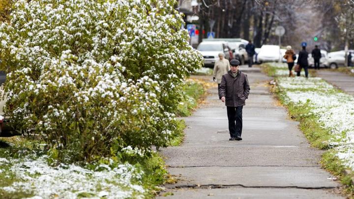 МЧС предупреждает: на Ярославскую область движутся заморозки