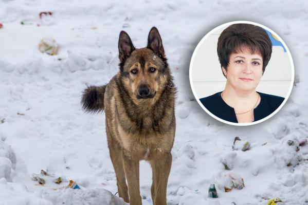 Жалобы на бродячих собак в Тюменском районе участились