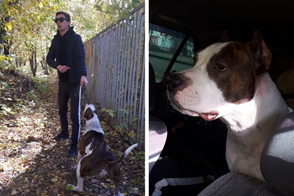 Хозяин собаки (на фото слева) сегодня забрал своего стаффа домой