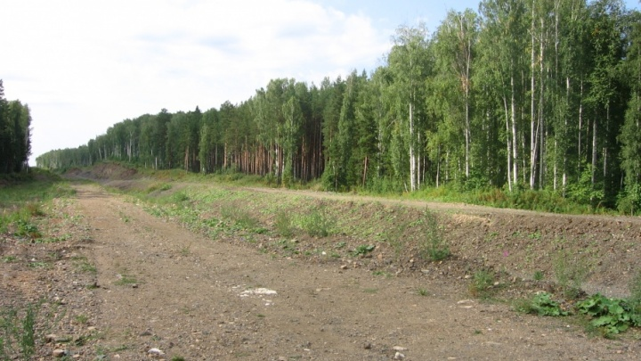 Россельхознадзор поможет егерю убрать дорогу, за которую ему назначили штраф в 2,5 млн