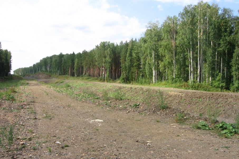 На месте дороги вновь появится поле