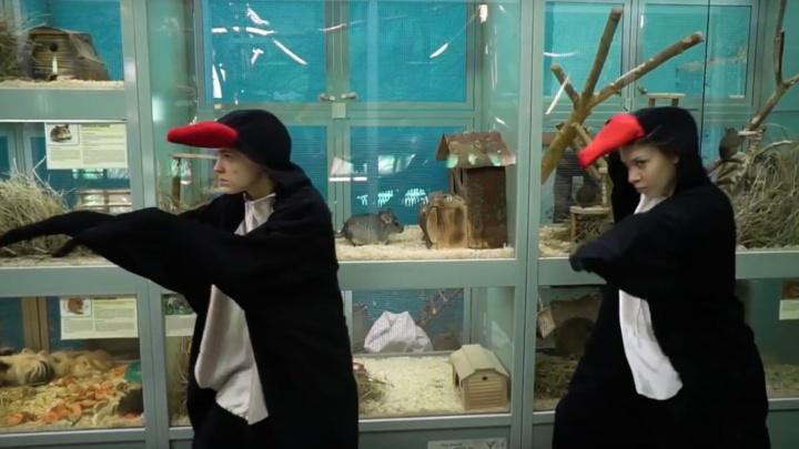 В пермском зоопарке сняли шуточный ролик про побег пингвинов. Видео
