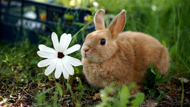 История о лете и рыжем крольчонке: самый милый фоторепортаж