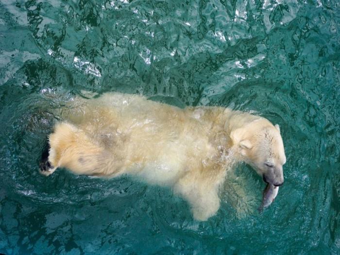 Директор зоопарка уверил, что всех животных узаконят