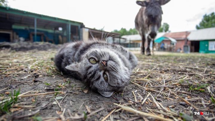 «Здесь нас очень много»: 74.ru узнал, кто и как живёт в зоне отчуждения — всанитарной полосе ЧЭМК