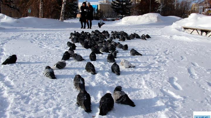 Зима не сдаётся: в Кемеровской области морозы продержатся неделю