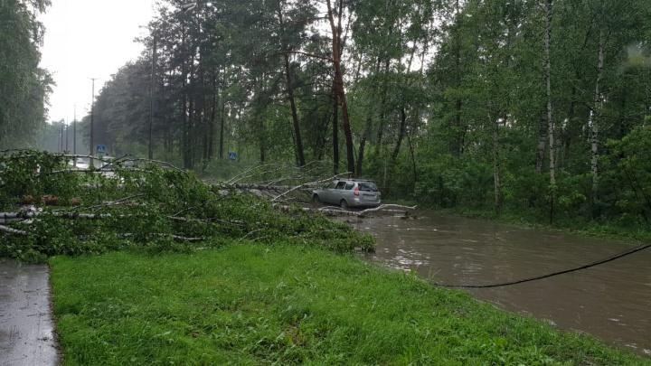 Внезапная буря повалила деревья в Академгородке