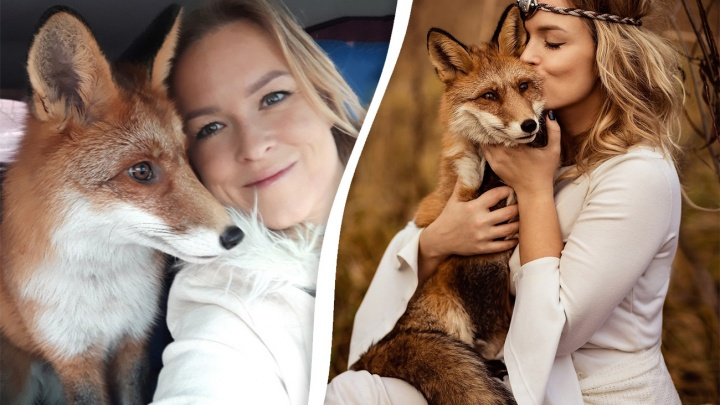 Ярославцы ищут лиса Гришу, сбежавшего от хозяев