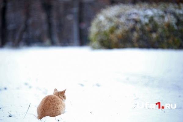 Зима красивая. Любите зиму? А она вас?