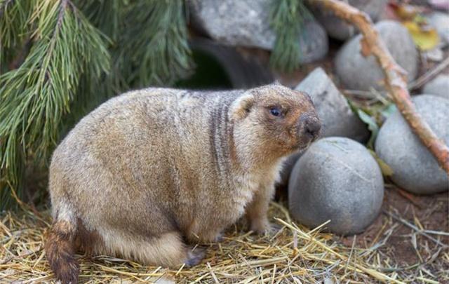 Весна пришла: в челябинском зоопарке проснулись сурки