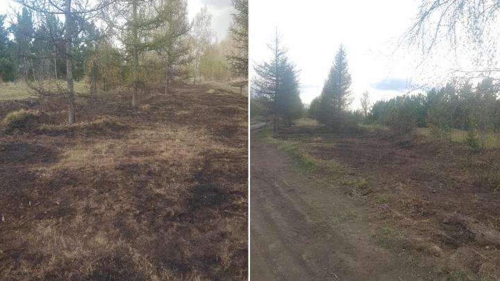 На острове Татышеве из-за пала травы сгорел яблоневый сад Петра Пимашкова