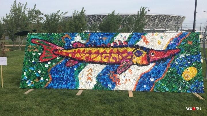 Волгоградцы из восьми тысяч пластиковых крышек собрали гигантского осетра