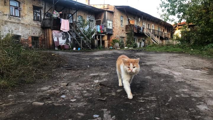 Забытая столица мотоциклов и местный йогурт: что интересного можно найти в Ирбите