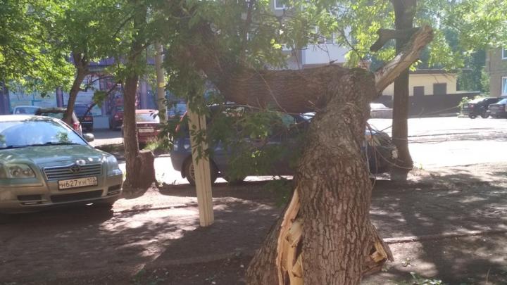 В Уфе ищут владельца машины, на которую того и гляди рухнет дерево