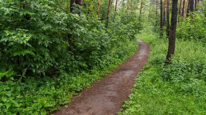 Будут бежать и прибираться: в Перми пройдет экологическая акция «Чистая среда — 2019»