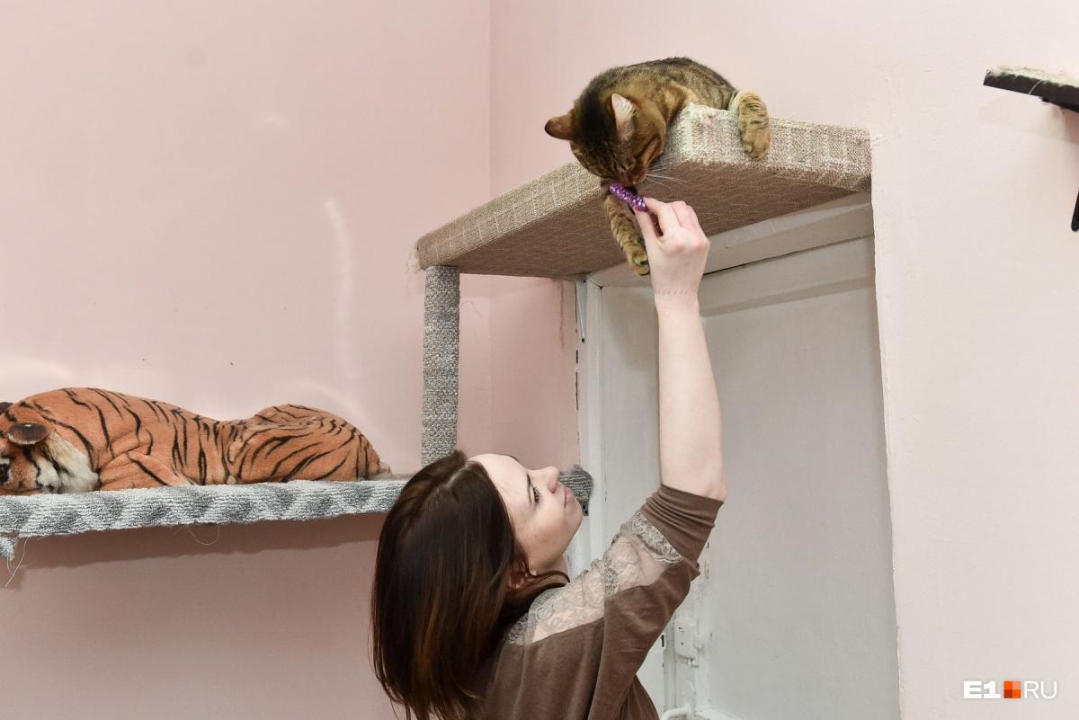 С котиками нужно много играть.Частые игры избавляют котов от стресса