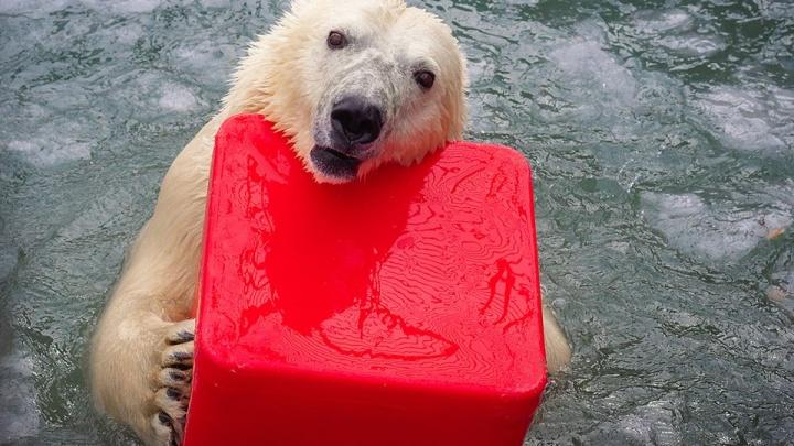 Медведям из «Роева ручья» устроили фотосессию в бассейне с гигантскими кубиками