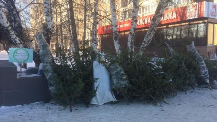 Не нужно ждать до февраля: экоактивисты Ярославля заберут вашу новогоднюю ёлку прямо из квартиры