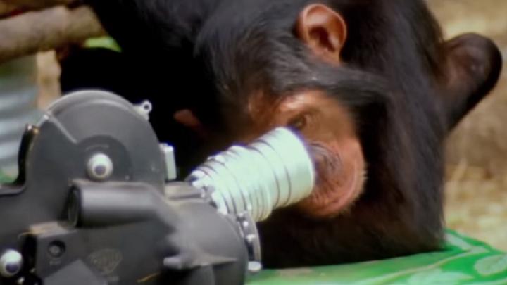 О шимпанзе, киборгах и душе: пять научных фактов из фильмов пермского фестиваля FUTURE.DOC