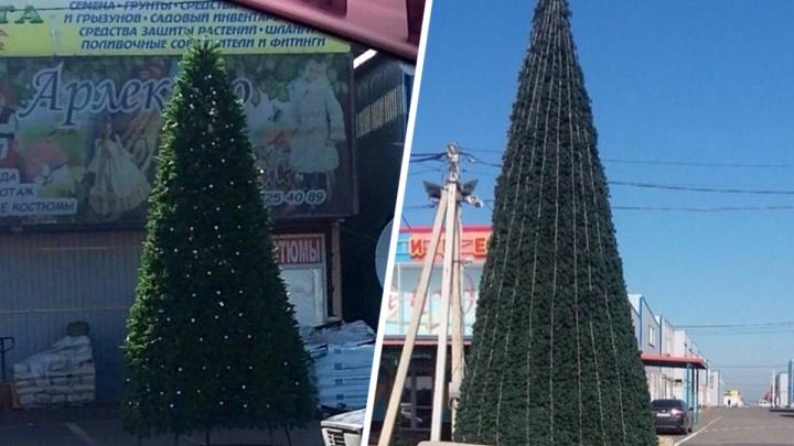 «Пока поставим, пока украсим»: на ростовском рынке «Атлант» появились новогодние елки