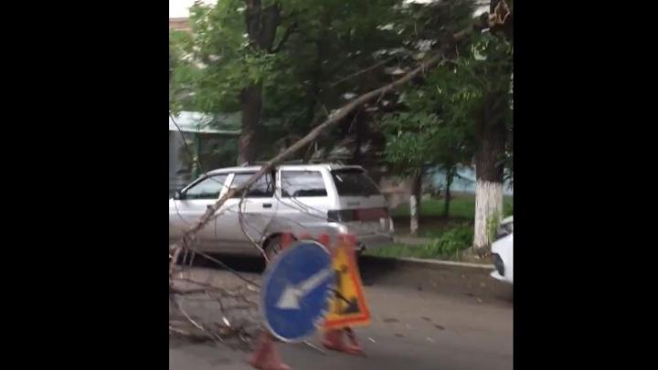 В центре Уфы «одиннадцатую» накрыло деревом