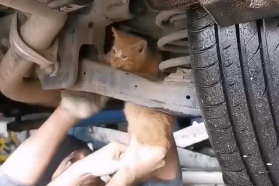 Достать рыжего котёнка удалось лишь в автосервисе