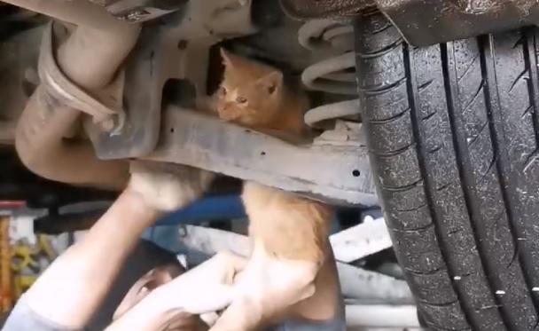 «Денег не возьмём!»: в Ярославле сотрудники автосервиса спасли котёнка, застрявшего в машине. Видео