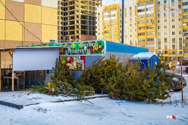 В прошлом году Челябинск утонул в ёлочных свалках, которые устроили торговцы