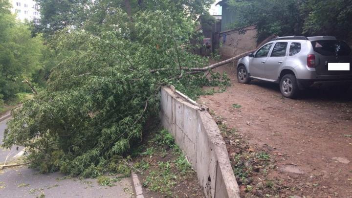Оборванные провода и поваленные деревья: собираем последствия ночного урагана над Башкирией
