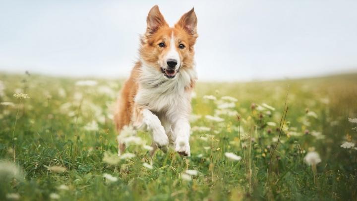 Акция «Собака-улыбака» снова порадует тюменцев