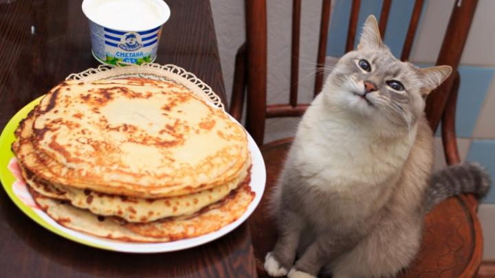 Кот-мем с блинами — из Перми, и у него недавно был день рождения. Мы нашли его хозяина
