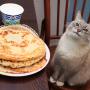Вы не поверите, но еще один кот-мем — тот, что с блинами — тоже из Перми