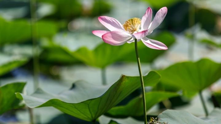 Ольга Жинжикова: «Ни одно селфи с цветком не стоит такого позора»