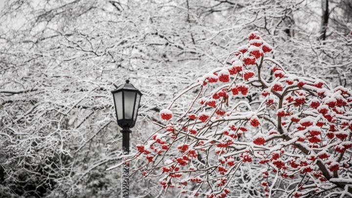 Синоптики рассказали, когда в Новосибирской области может лечь снег