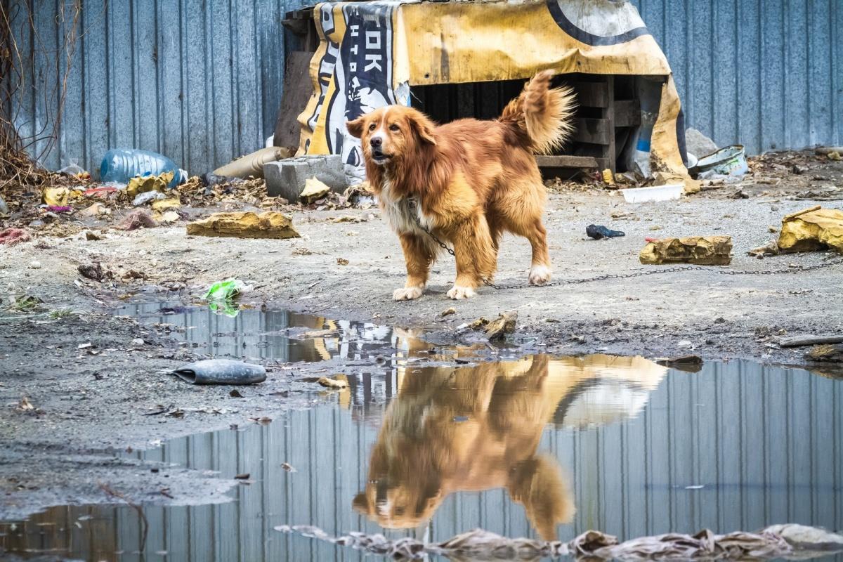 «ГорЭкоЦентр» перестанет вывозить мусор на свалку, но продолжит ловить бродячих собак и заниматься умершими, у которых нет близких