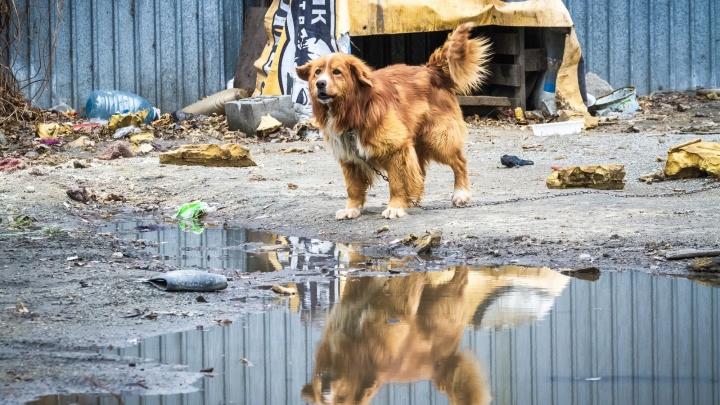Отлов собак и вывоз умерших: после закрытия свалки «ГорЭкоЦентр» получит новые задачи