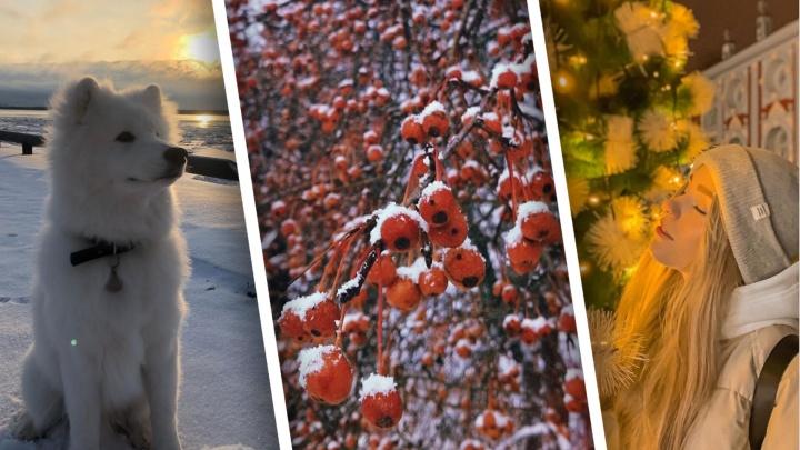 Много снега, нарядные ёлки: инстафото северян, которые напомнят вам о том, что зима — это красиво
