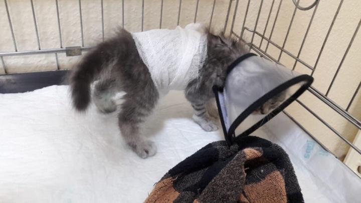 «Она вскрыла живот Васе за 45 тысяч рублей»: волгоградцы уверены, что их разорила врач-ветеринар