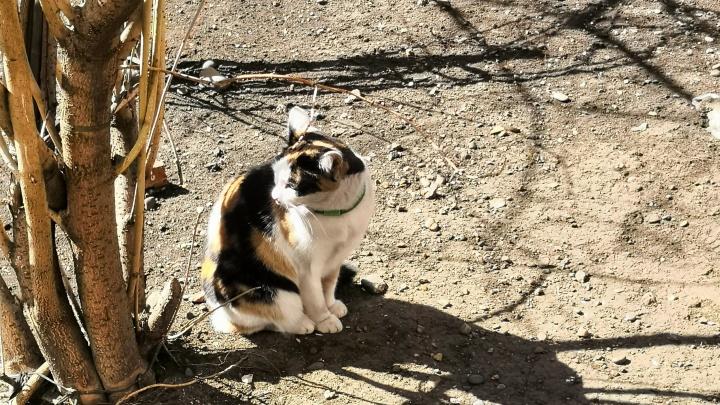 В Минусинске спасатели помогли напуганной кошке, два дня просидевшей на дереве
