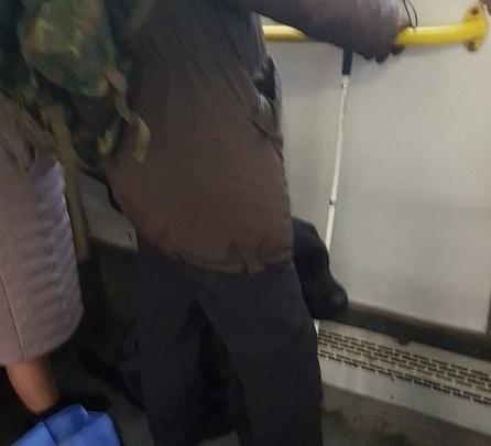В пермском автобусе у инвалида по зрению требовали заплатить за провоз собаки-поводыря