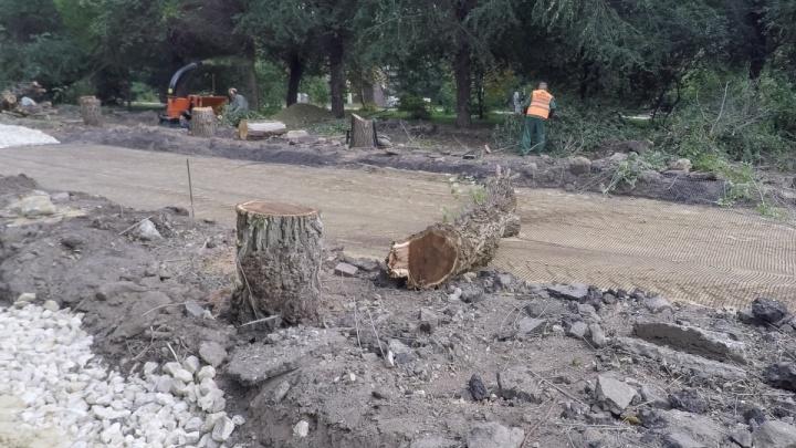 Набережную от «танцующего» моста до «Волгоград Арены» засадят крымскими соснами