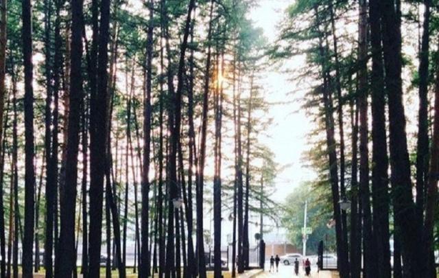 В Уфе мужчина заблудился в лесопарке «Президент Отеля»
