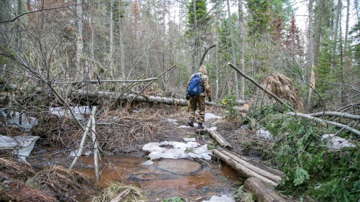 Первый случай исчезновения в лесу произошел в Красноярском крае с приходом тепла